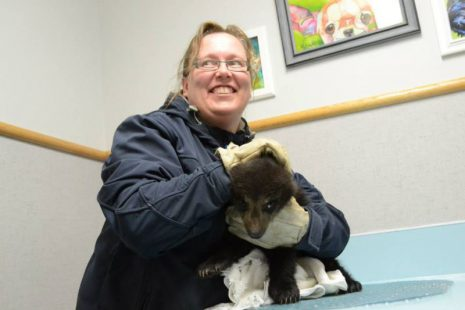 Image shows woman in thick jacket and gloves holding a bear cub.