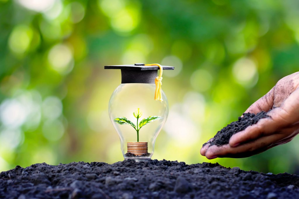 An image of a light bulb, seedling and graduation cap.